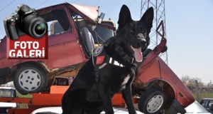 """Narkotik dedektör köpeği """"Alfi"""" polislerin en büyük yardımcısı"""