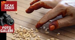 """TİGEM'den çiftçiye """"yerli ve milli sebze tohumu"""" katkısı"""