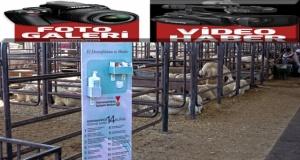 Canlı hayvan borsasında 'kontrollü' satışlar başladı