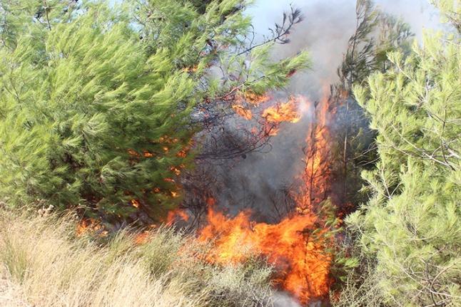 Yangında mahsur kalan bir kaplumbağa itfaiye ekiplerince kurtarıldı