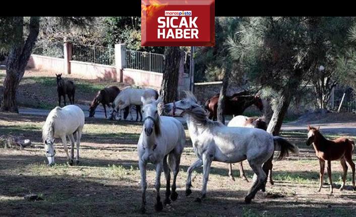 Hatay Dörtyol'a gönderilen atlar, Kahramanmaraş'a mı satıldı?