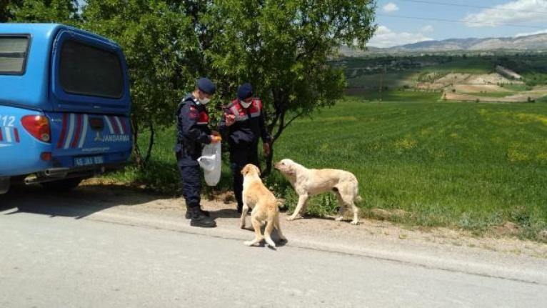 Jandarma, sokak hayvanlarını besledi...