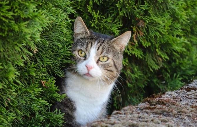 Kedilere sokağa çıkma yasağı geliyor!