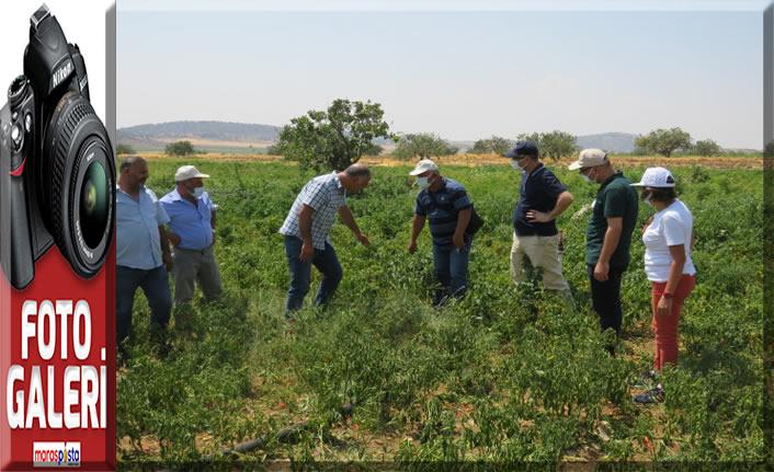 FAO Koordinatörleri İlimizde yürütülen projeleri gezdiler