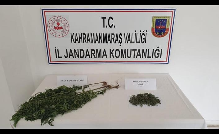 Afşin'de uyuşturucu operasyonu: 3 kenevir ele geçirildi