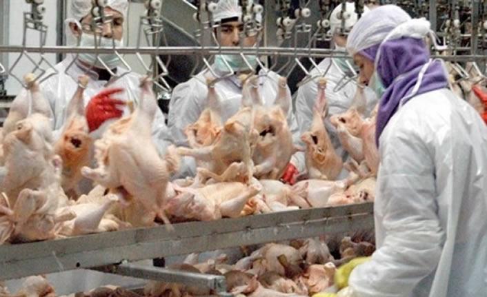 Temmuz ayında 161 bin 923 ton tavuk ürettik!