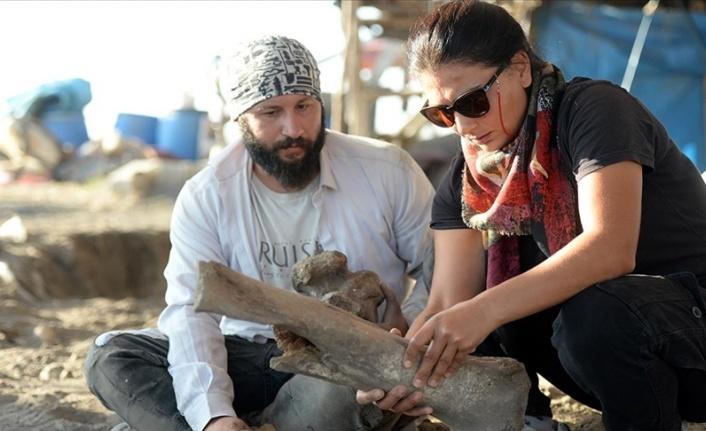Türkoğlu'nda bulunan fil fosilleri incelemeye alındı