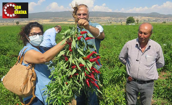 Uygulamalı çiftçi okulunda kırmızıbiber eğitimi gerçekleştirildi