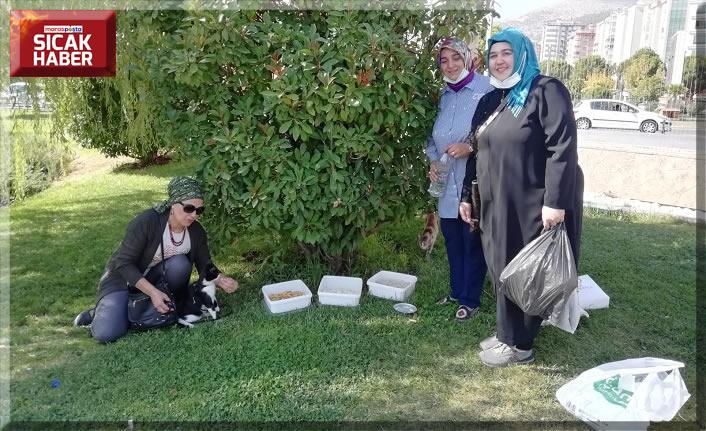 Deva Partisi, sokak hayvanlarına mama ve su bıraktı
