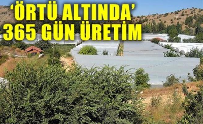 'ÖRTÜ ALTINDA' 365 GÜN ÜRETİM