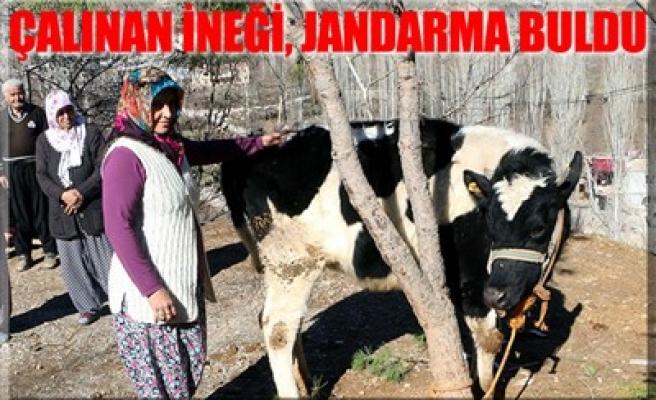 ÇALINAN İNEĞİ, JANDARMA BULDU