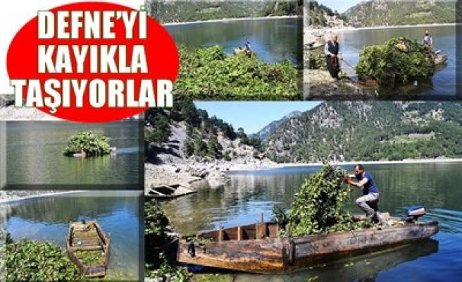 DEFNE'Yİ KAYIKLA TAŞIYORLAR
