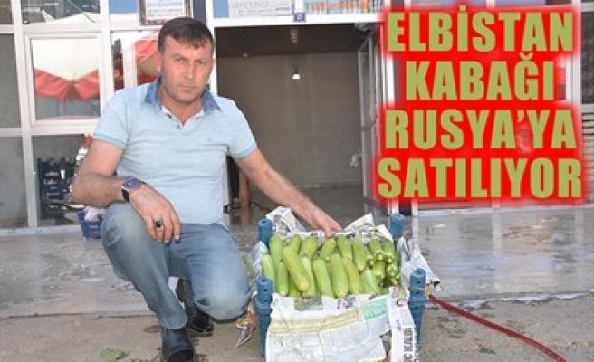 ELBİSTAN KABAĞI RUSYA'YA SATILIYOR