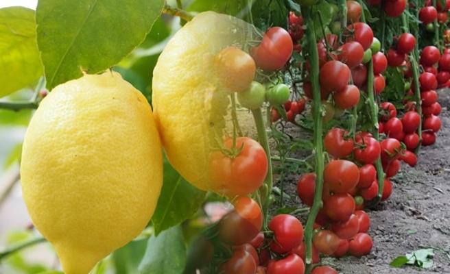 Limon 'artış', domates 'düşüş' şampiyonu…