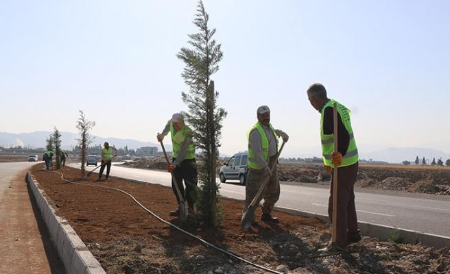 Büyükşehir Belediyesi, yolları ağaçlandırıyor