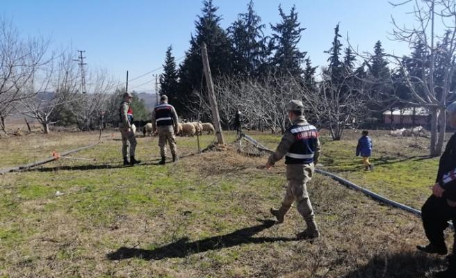 19 koyun çalan hırsızları jandarma yakaladı
