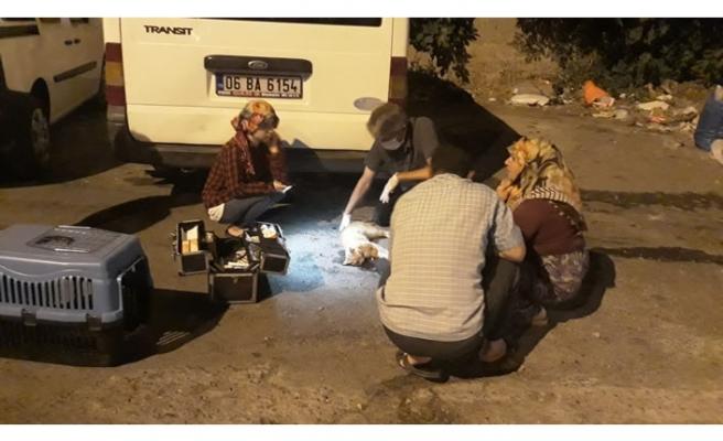 Büyükşehir'den yaralı kediye müdahale