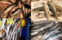 Gezgin balık mezgit hakkında her şey