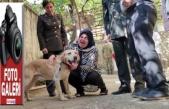 Gazi olan görev köpeği Atmaca'yı sahiplendiler