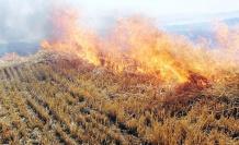 Çiftçilerin yaktığı anız havayı zehirliyor