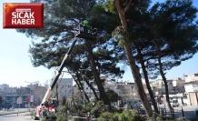 Dulkadiroğlu'ndan ağaç budama ve gençleştirme çalışması