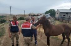 At hırsızı jandarmadan kaçamadı