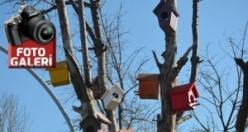 Elbistan'da ağaçlara kuş yuvası konuluyor