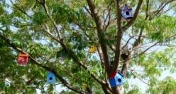 Gök-kuş-ağı Projesi ile kuş evleriyle donatıldı