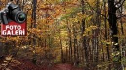 Amanos Dağlarında sonbahar manzaraları
