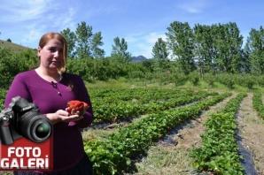 Tavsiye üzerine çilek bahçesi kurdu iş kadını oldu