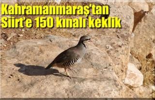 KAHRAMANMARAŞ'TAN SİİRT'E 150 KINALI KEKLİK