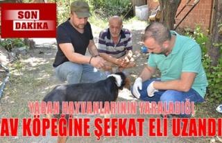 YABAN HAYVANLARININ YARALADIĞI AV KÖPEĞİNE ŞEFKAT...