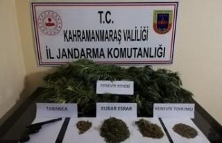 Pazarcık'ta kenevir yetiştiren şahıs gözaltına...