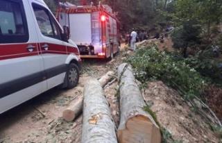 Kesim sahasında traktör devrildi: 1 ölü