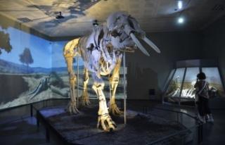 Müze sayısı yüzde 3 arttı