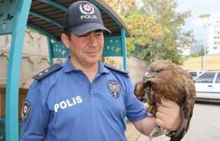 Akıma kapılan kızıl şahine polis sahip çıktı