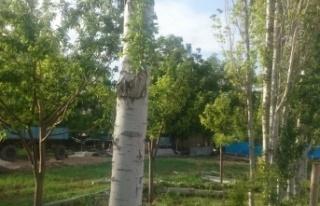 Oluşan hortum elektrik direği ve ağaçları devirdi