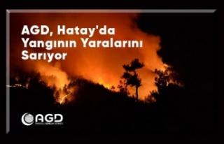 AGD, Hatay'da yangının yaralarını sarıyor