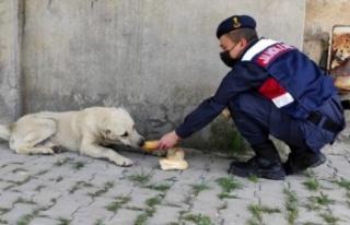 Jandarma'dan sokak hayvanlarına anlamlı destek!