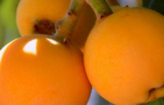 Yeni Dünya meyvesinin faydaları nelerdir?