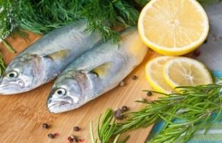 Lüfer: Denizlerin efendisi, balıkların babası
