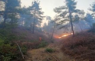 Bulutoğlu'nda orman yangın kontrol altında...