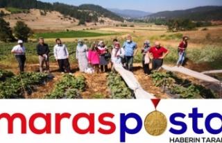 Çilek üreticilerine 'çiftçi inceleme gezisi'