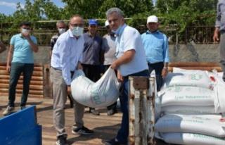 Dulkadiroğlu'nda kırmızı mercimek tohumu dağıtımı...