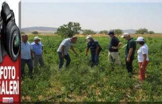 FAO Koordinatörleri İlimizde yürütülen projeleri...