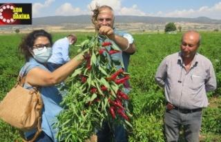 Uygulamalı çiftçi okulunda kırmızıbiber eğitimi...