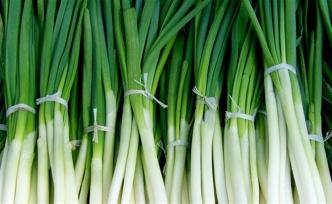 Yeşil soğanın faydaları ve zararları neler?