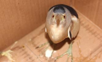 Hint Balıkçıl Kuşu görenleri hayran bıraktı!