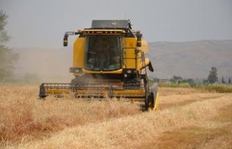 Bölgemizde buğday hasadı başladı