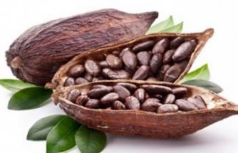 Kakao nedir? Faydaları nelerdir?